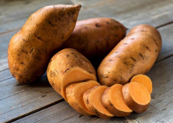 tatlı patates üretme fikri