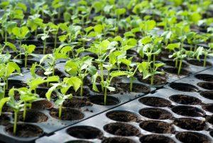 tarımsal anlamda yapılacak iş fikri