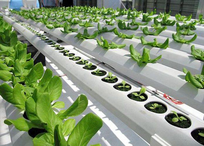 usta iş fikri, hidroponik tarım