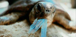 elazıglı iki kız öğrenciden plastiklerin yok olmasını sağlayacak buluş